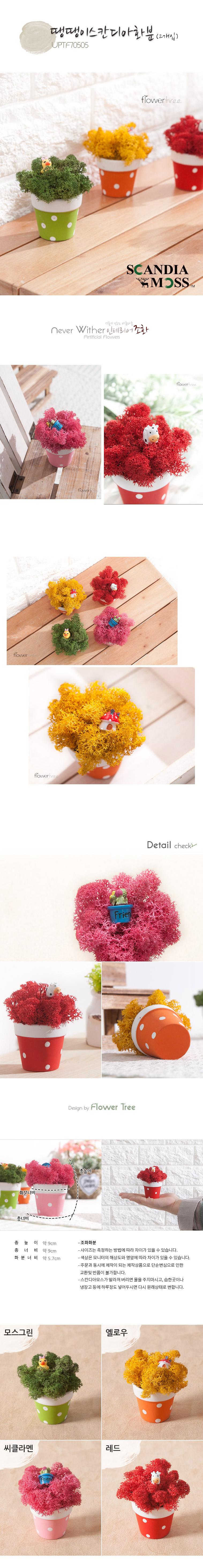 땡땡이스칸디아모스화분P (2개입) - 플라워트리, 7,200원, 조화, 비누꽃